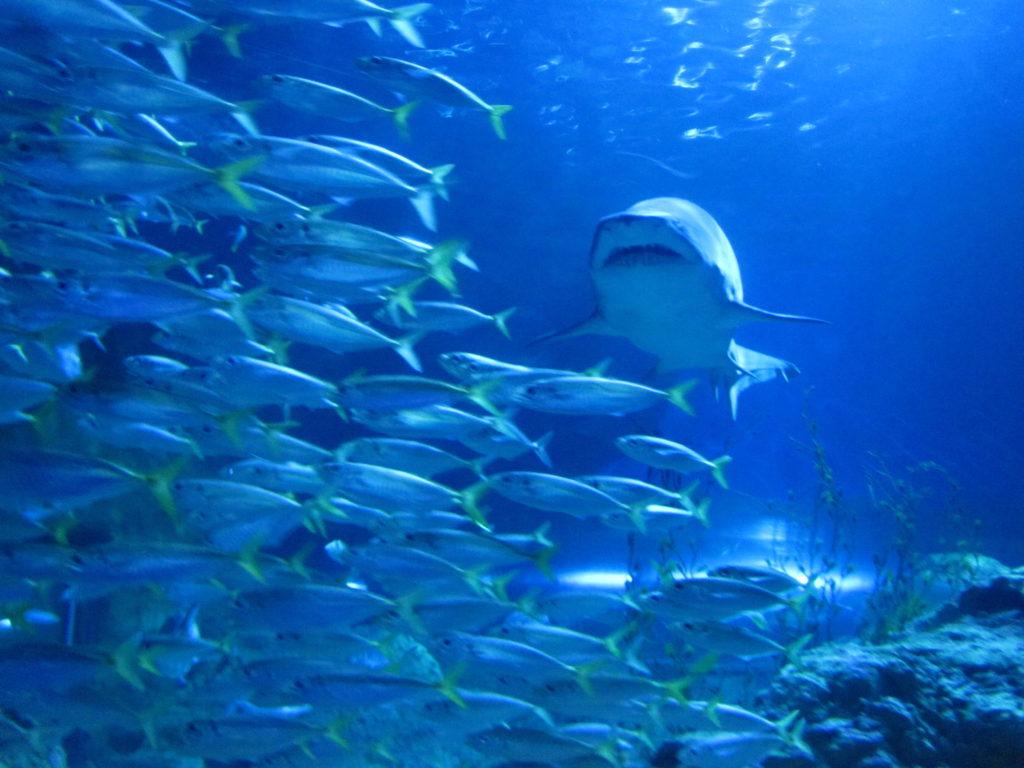 Silnější ryba pohltí tu slabší