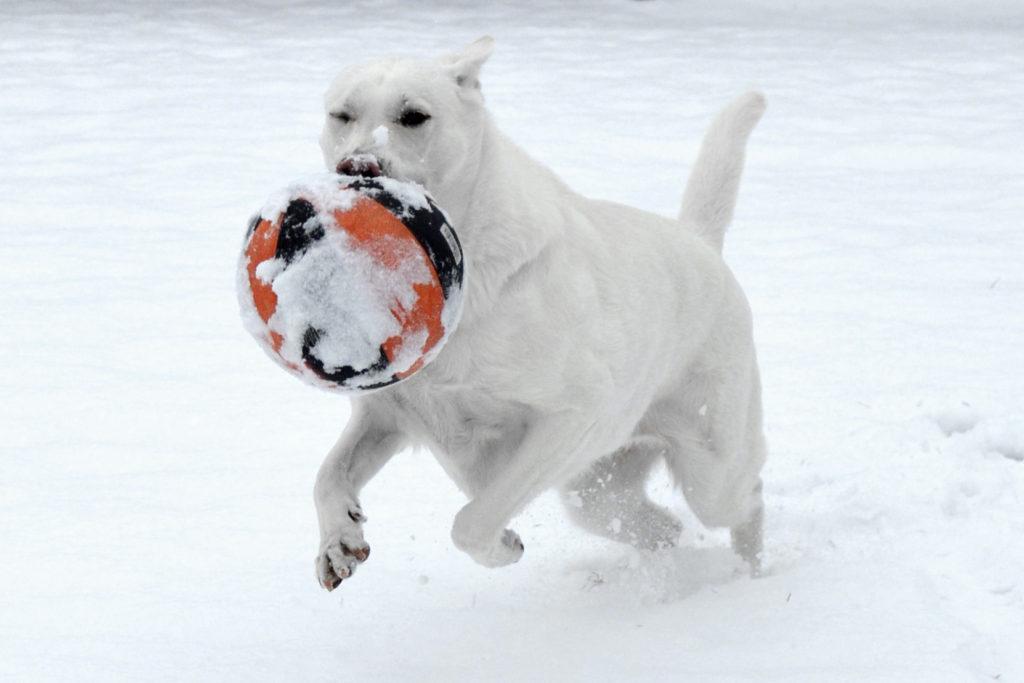 Bety slouží jako psi