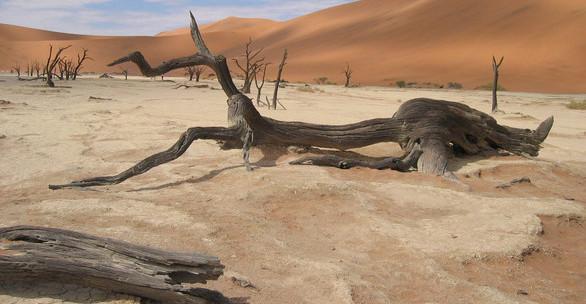 Suchá poušť