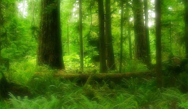 Zneklidňující les