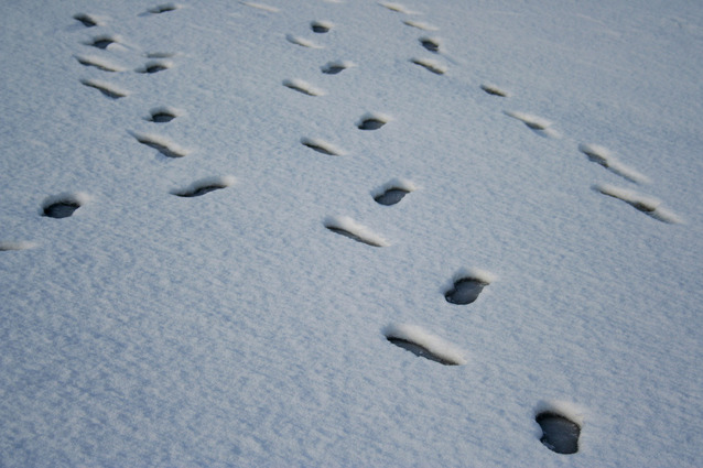 Stopy panictví ve sněhu