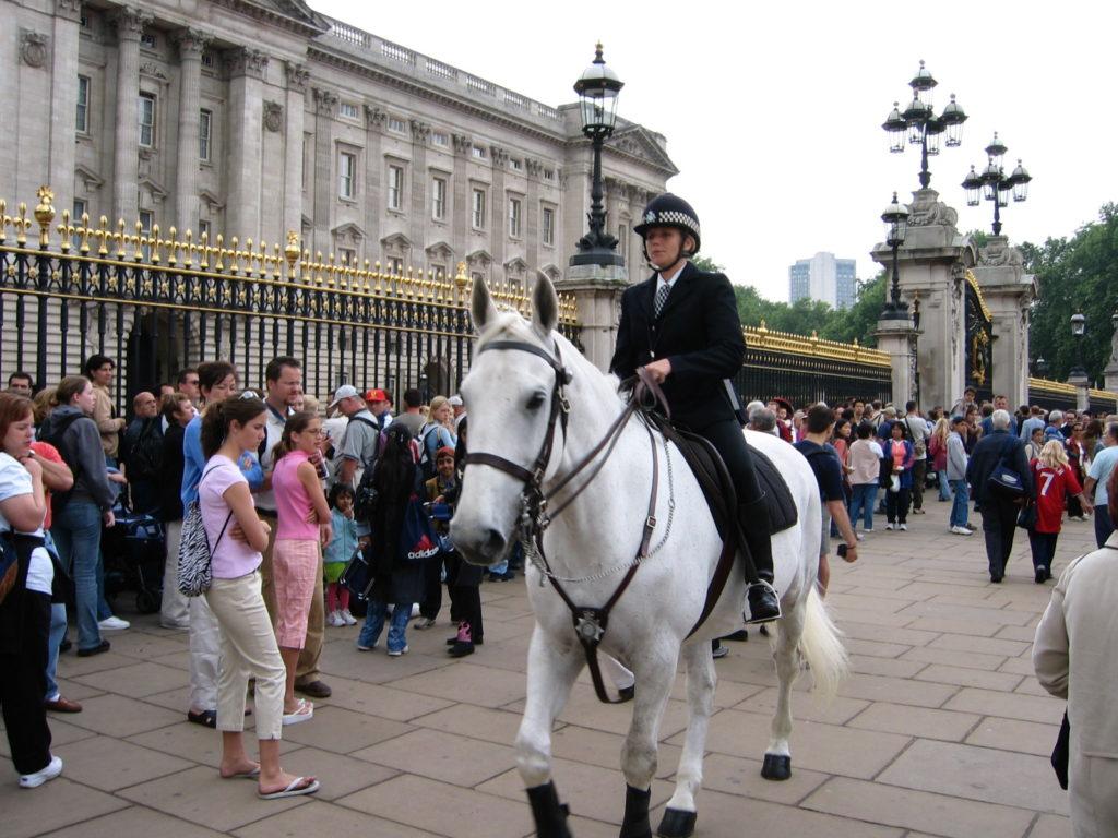 Vjeďte na street s koněm